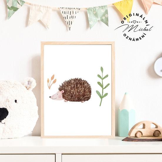 Plakát ježeček lesní bodlinka