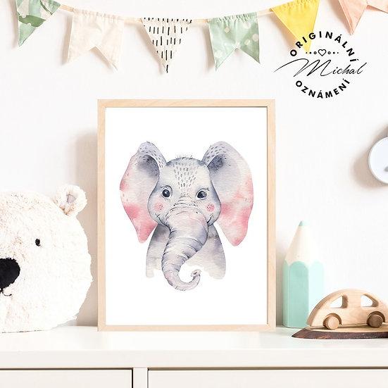 Plakát slon slonice Viki