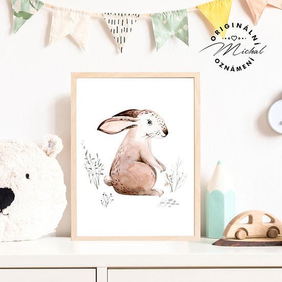 Plakát zajíček divoký