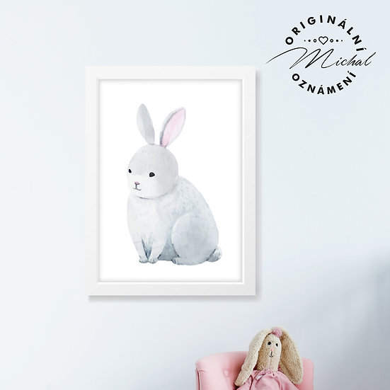 Zajda – plakát