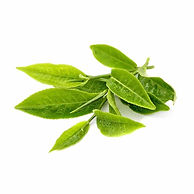 ingredient-green-tea-leaf.jpeg