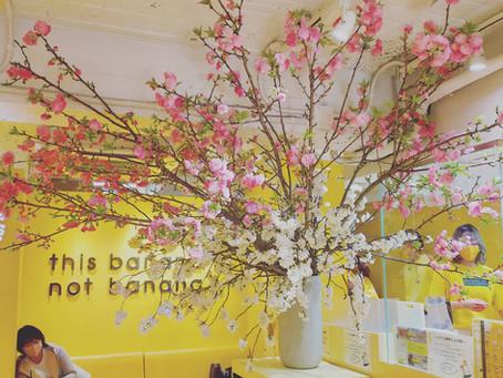 桜の店舗装花