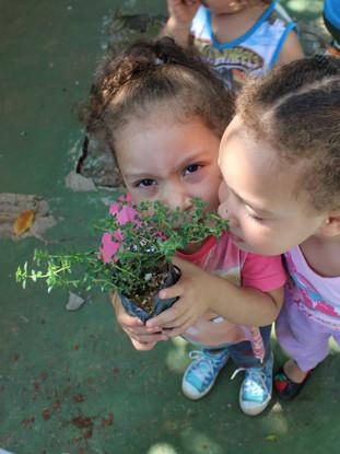 Plantation dans une école