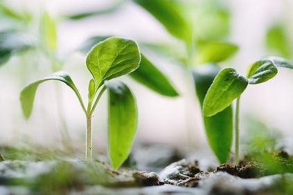 Jeunes pousses de plantes