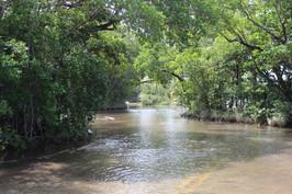 King Tides in Matheson Hammock Park