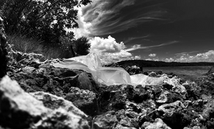 Plastic bag in Key Biscayne