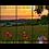 Thumbnail: Poppy Sunset Multi-Panel Wall Art