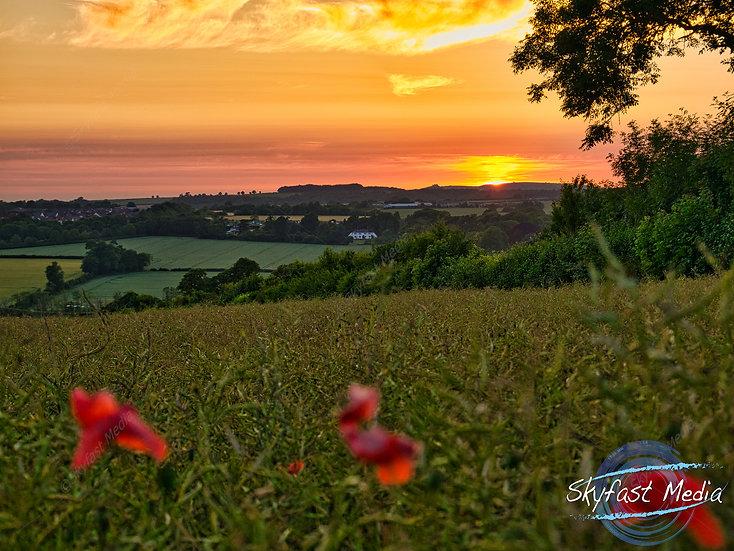 Poppy Sunset Canvas