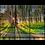 Thumbnail: Summer Sunset Through Trees Multi-Panel Wall Art