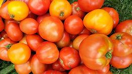 Dev garden pic 5 tomatoes.jpg