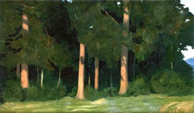 Forêt H.Emmenegger.jpg