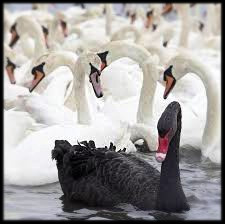 All swans are white