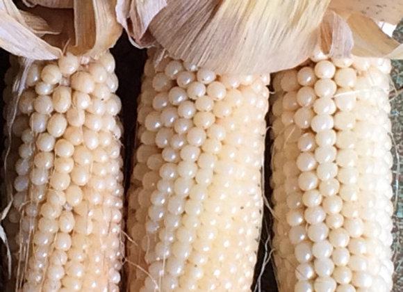 Japanese White Hulless Popcorn