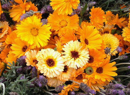 Flowers: Food for the Soul