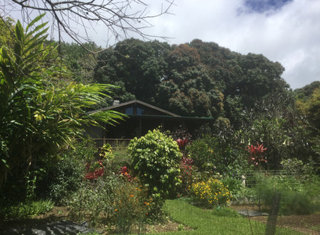 Getting Started: Creating a Home Garden in Hawai'i