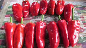 HI Sunray Kaala peppers.jpg