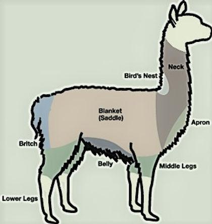 Alpaca diagram.jpg