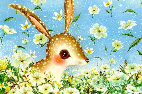 Postcard / Rabbit