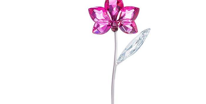 Swarovski figurer Orchid, large