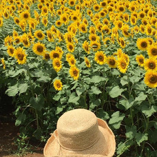 Sunflower and my daugter