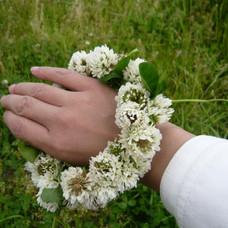 A bracelet of white clover