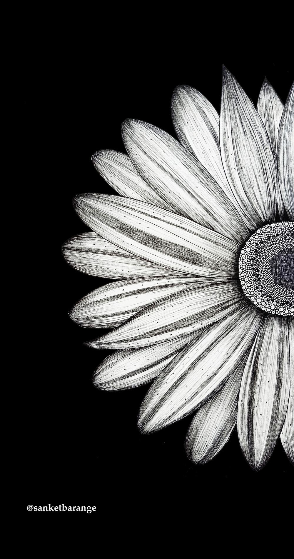 sunflower wallpaper ,black and white wallpaper ,suflower,artist wallpaper