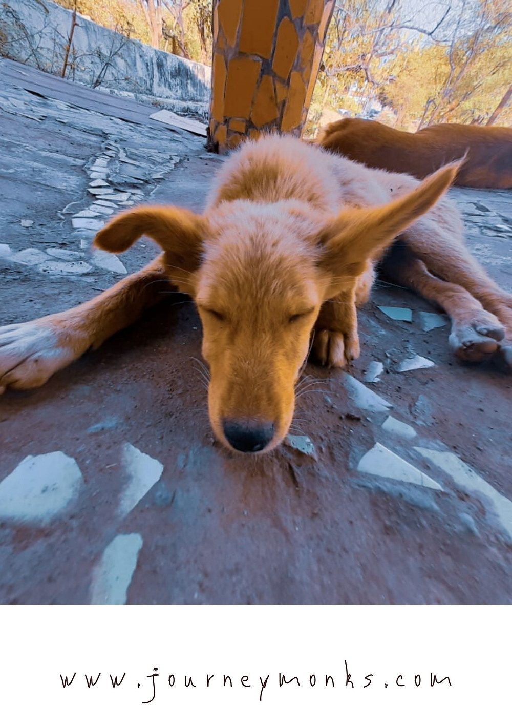 Cute Animal wallpaper,cute animals,dog,cute dog,sleeping dog,dog picture,wallpaper for mobile,pc wallpaper,dog wallpaper.