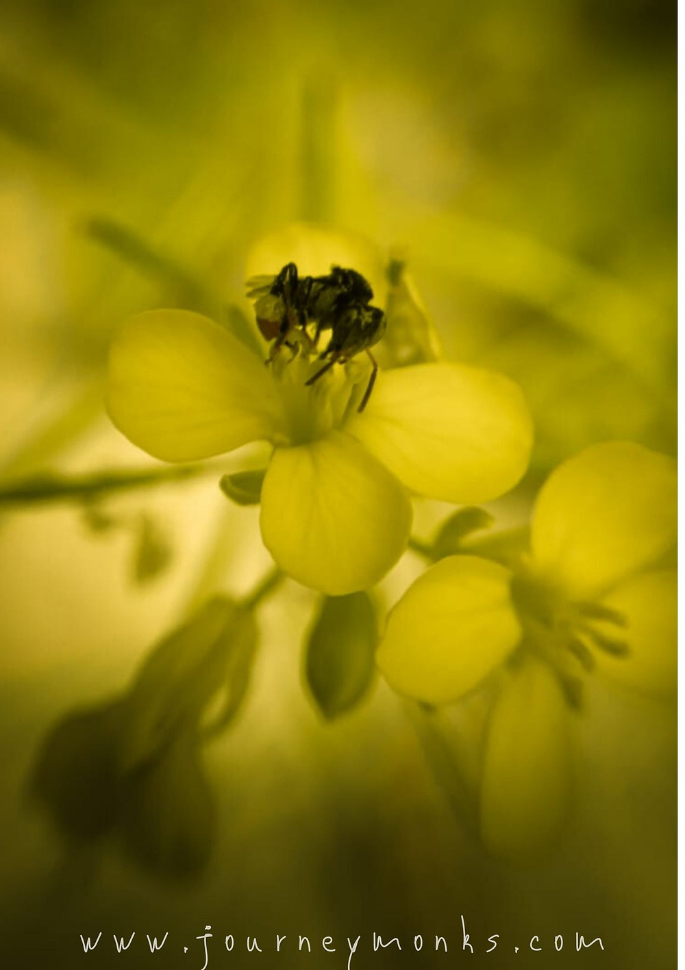 be u,bee wallpaper,wallpaper for mobile,wallpaper for pc,yellow flower,honey bee