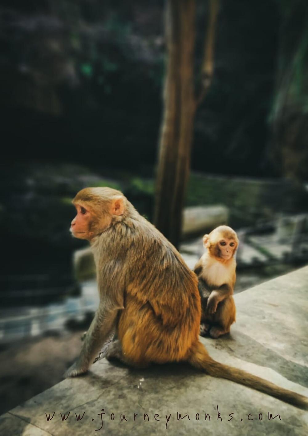 Cute Animal wallpaper,cute animals,monkey,cute monkey,monkey picture,wallpaper for mobile,pc wallpaper,monkey wallpaper.