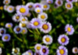 lifeflower_flower.jpg