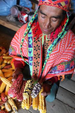 Heritage corn varieties
