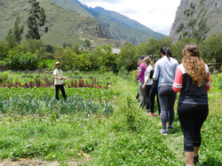 Learning about Andean agriculture