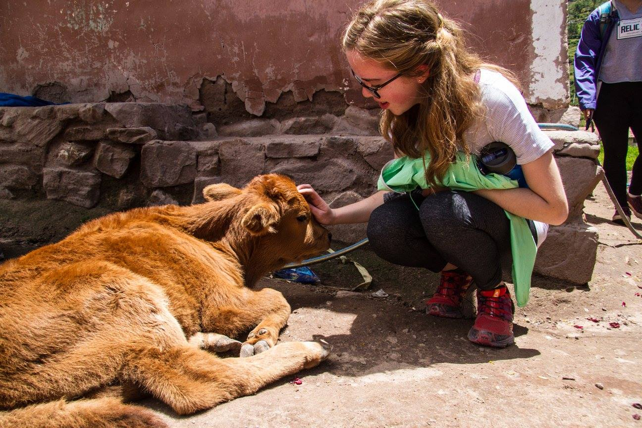 Student petting cow