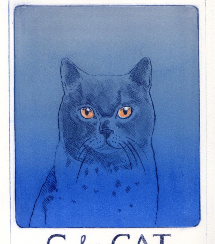 Blue Cat copy