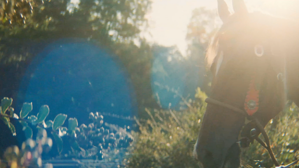 Horse n light.png