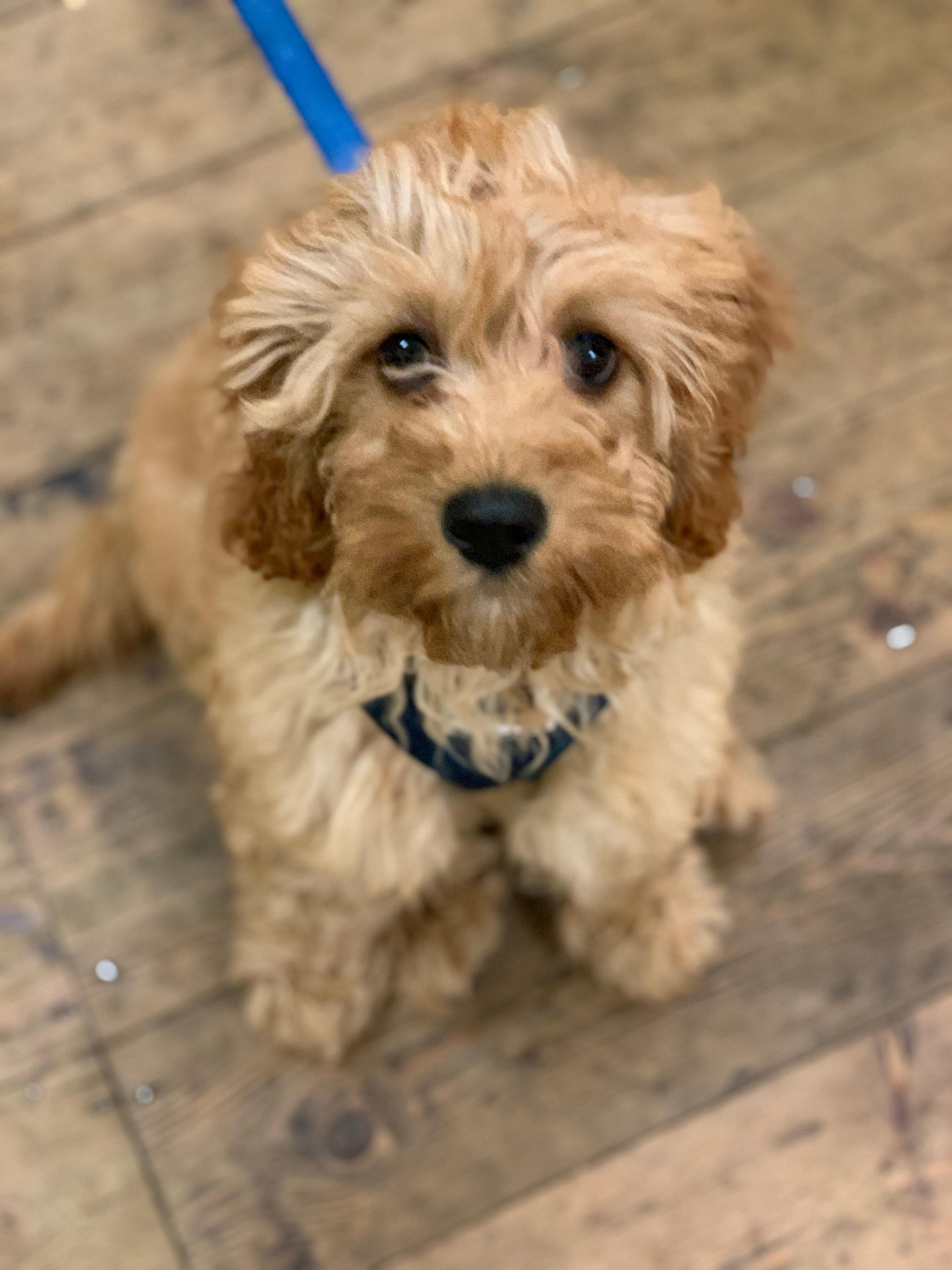 11am Puppy Class Saturday- under 6 month