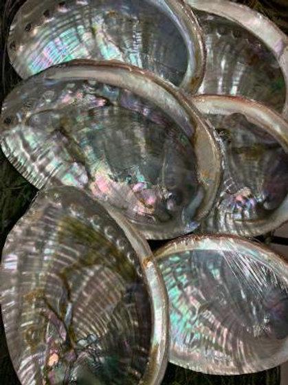 Large Abalone  (5-7 inch)