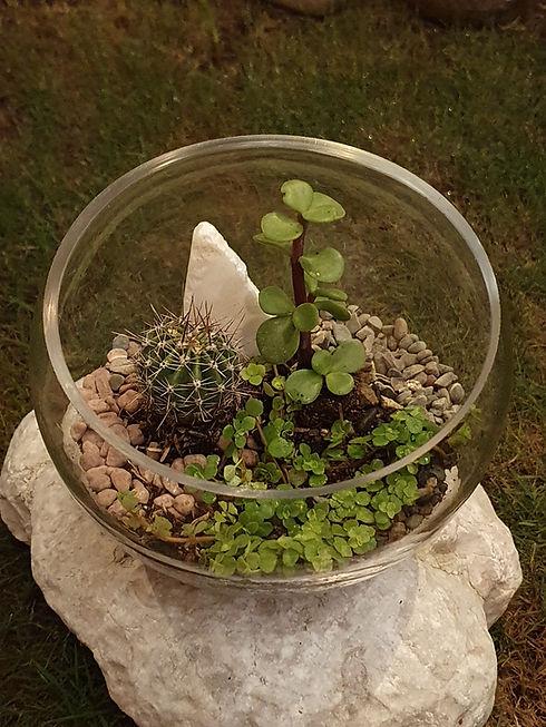 Suculenta y cactus.jpg