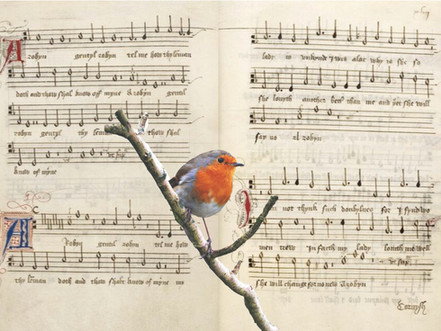 """Ah Robin"""