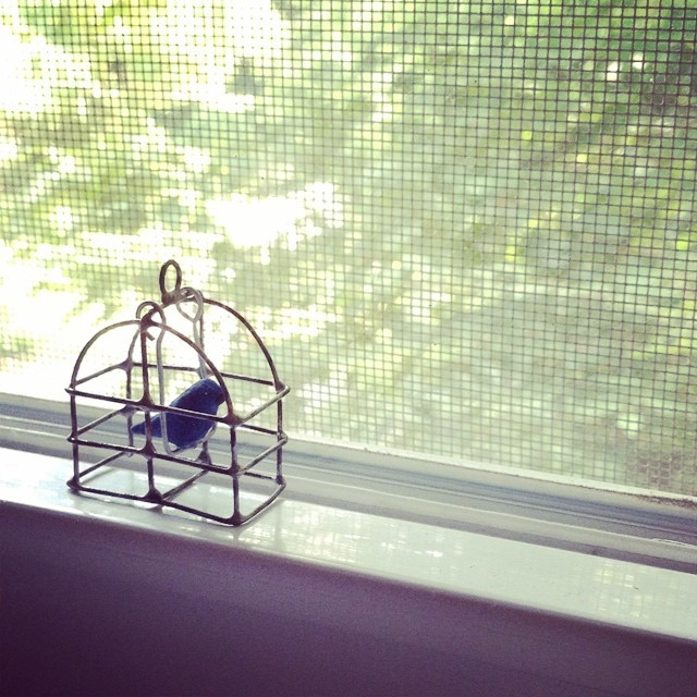 birds, cages and flying