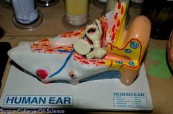 Ear Daig