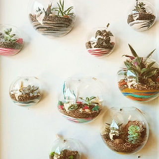 Wall terrariums💚💚💚#dartmouthns #plant