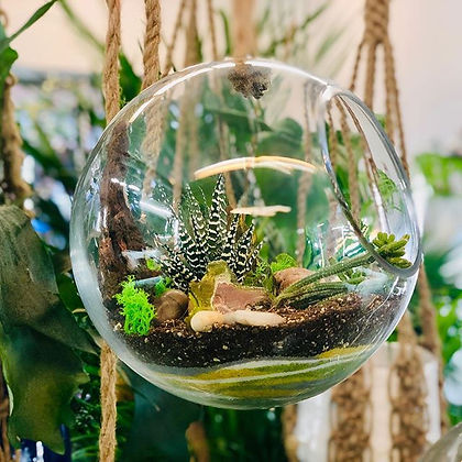 New Terrariums built every day, see you