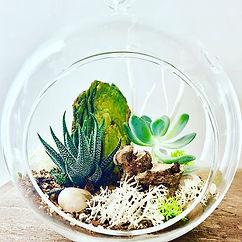 Terrarium Classes and Plant Care Class i