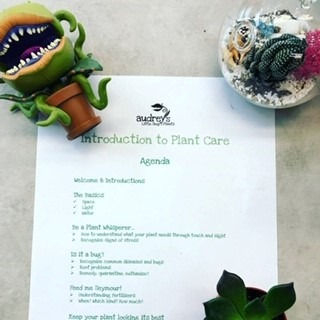 Introduction to Plant Care (Halifax)