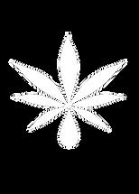 website cannabis