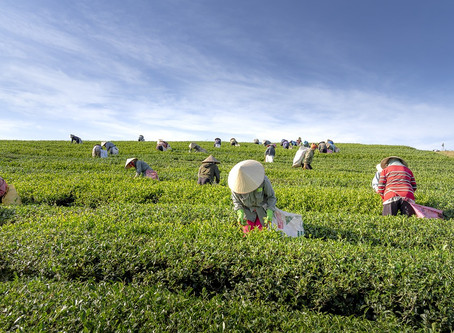 Sustainability // What is Fair trade farming?