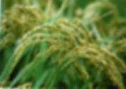 三五教,あなない,ananai,鎮魂,農業