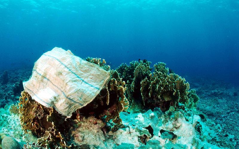 coraux-victimes-de-pollution-plastique-1