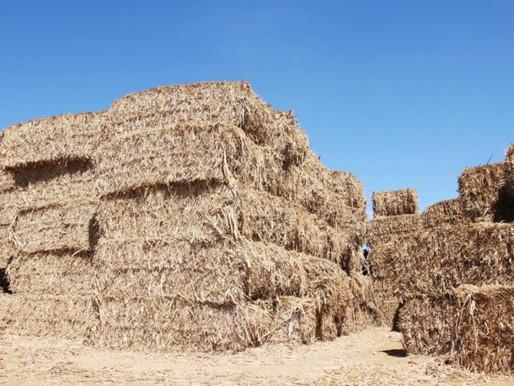 Parceria entre Prefeitura de Juazeiro e Agrovale beneficia criadores com entrega de palhada